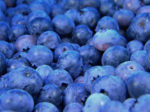 Myrtilles bleues