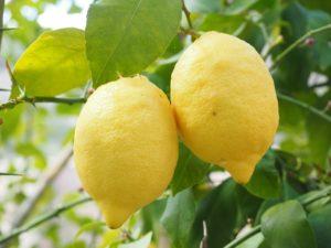 les citrons contiennent de l'acide citrique