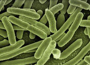 dictame lutte contre les bactéries