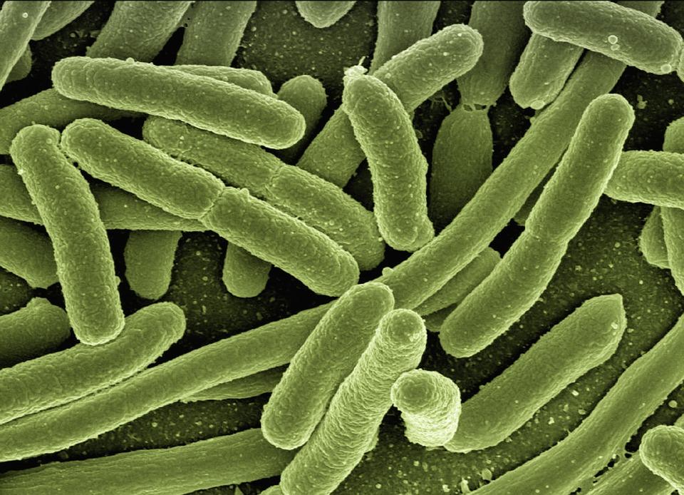 bactérie hiver